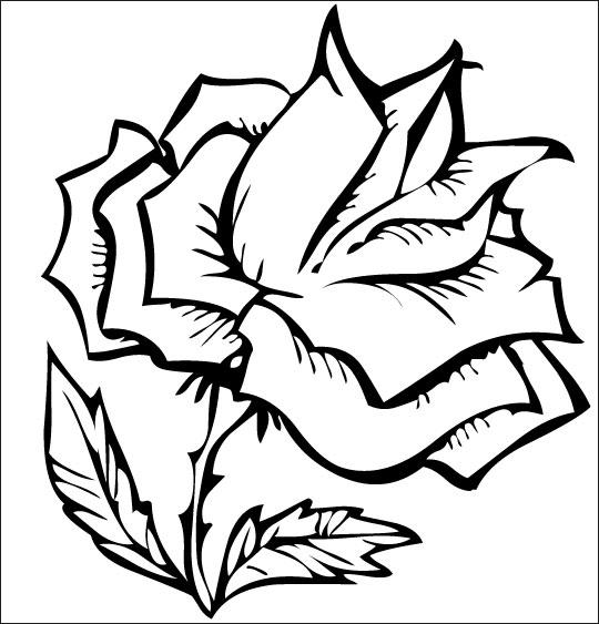 Coloriage pour enfants. Coloriage À la Claire Fontaine, une rose splendide, thème Fleurs