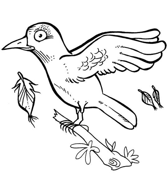 Coloriage Chanson Alouette, une alouette sur une branche a perdu 3 plumes