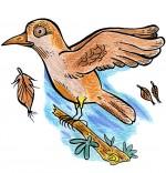 Illustration Chanson Alouette, une alouette sur une branche a perdu 3 plumes